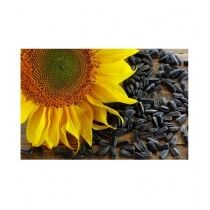 DIY Store Sunflower Giant Summer Flower Seeds